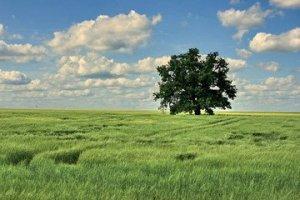 solitary-tree-1368960